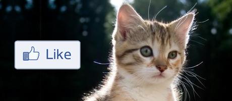 Emoticon Gattino su Facebook