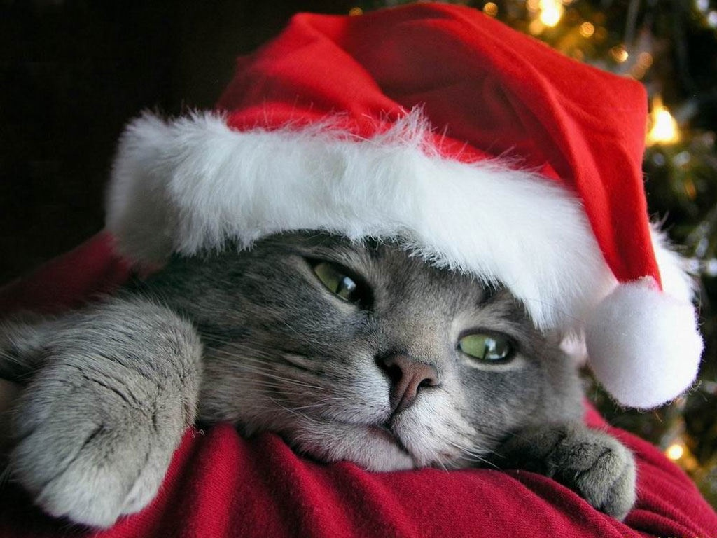 Youtube Frasi Auguri Di Natale.Buon Natale Divertente Dehandigewebsite