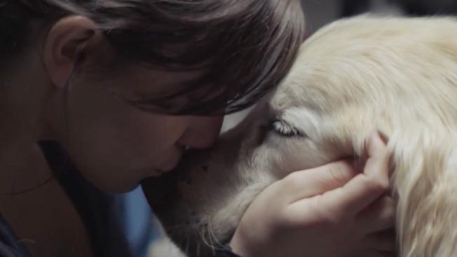 Se non abbracci il tuo cane dopo aver visto questo non sei umano